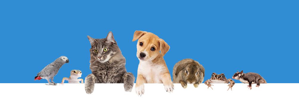 Adopting A Pet Dog Medicanimal Com