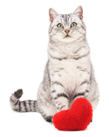 cat with heart