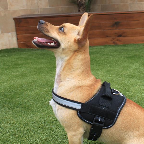 Kokoba Padded Dog Harness | MedicAnimal.com