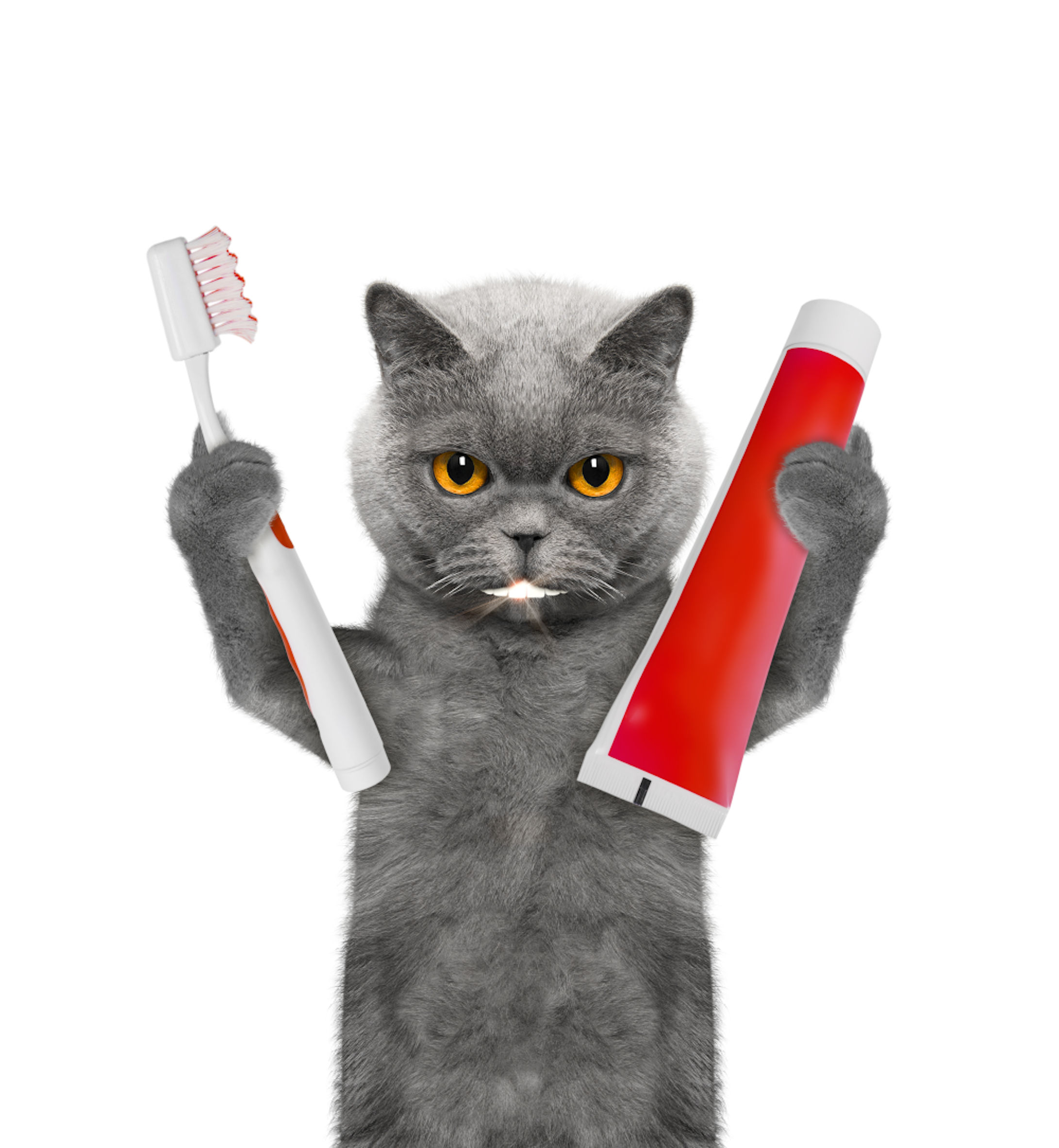 Understanding The Common Causes Of Halitosis Bad Breath In Cats Medicanimal Com