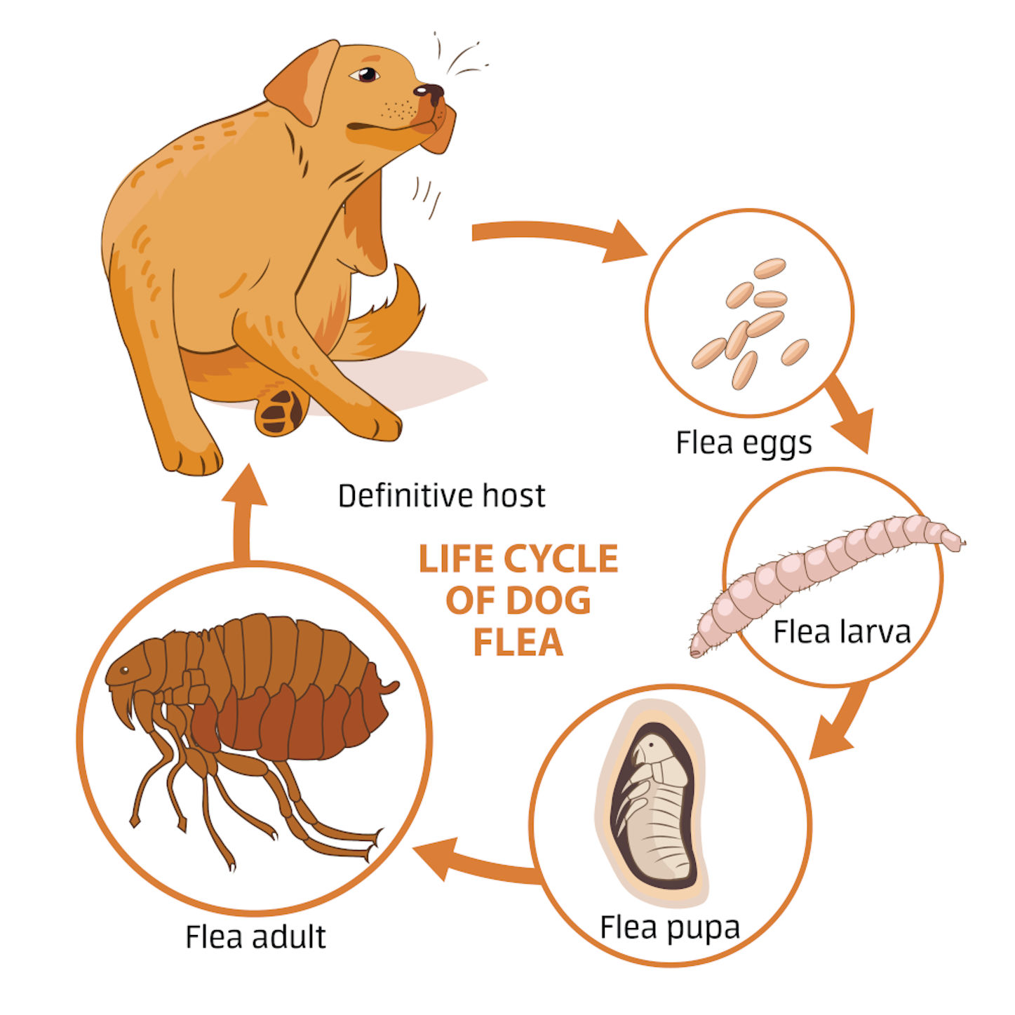 16 FAQ's about Fleas, Ticks, and Flea Infestations in Dogs