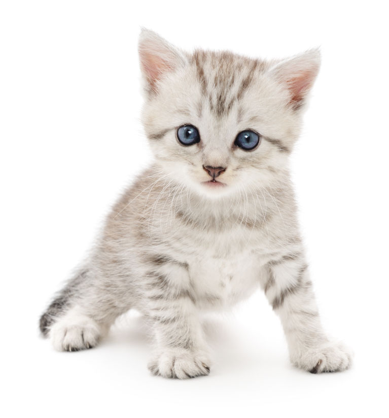 Bringing Up A Litter Of Kittens Health Considerations International Cat Care