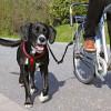 Trixie Biker-Set Fahrradführung