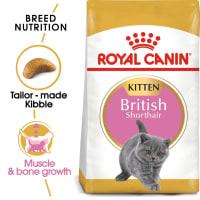 Royal Canin British Shorthair Kitten Chaton