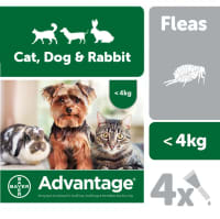 Advantage 40 for Small (less than 4kg)  Cats, Dogs, and Rabbits - 4 pipettes