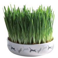 Trixie Cat Grass with Ceramic Bowl