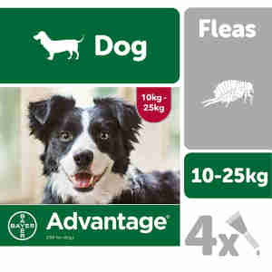 Advantage 250 for Dogs 10-25kg - 4 pipettes