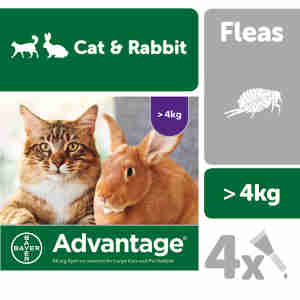 Advantage 80 for Large Cats and Rabbits