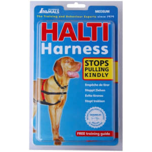 how to put on a halti harness