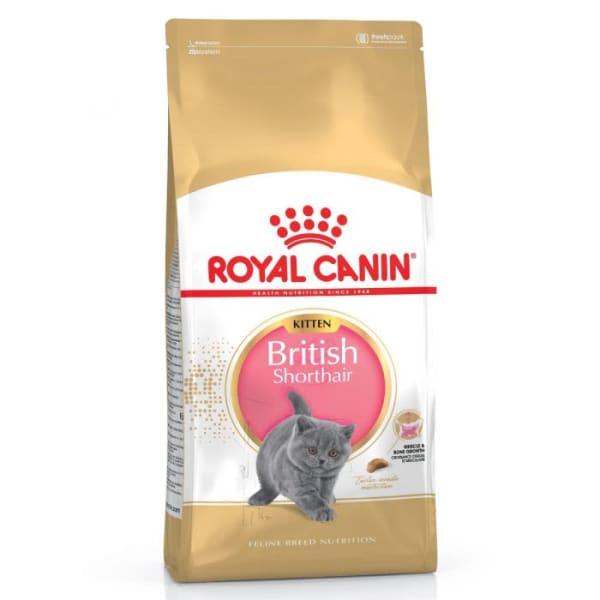 Royal Canin British Shorthair Kittenfutter trocken für BKH Kätzchen