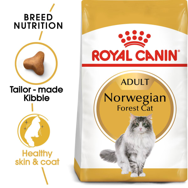 Royal Canin Bread Norwegian Forest Adult Dry Cat Food