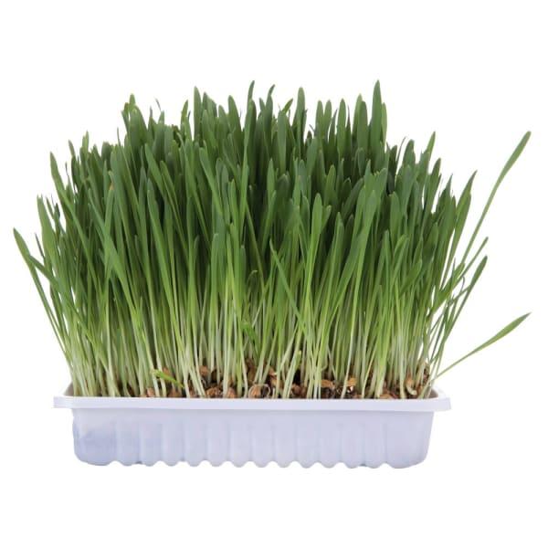 TRIXIE Gras voor katten