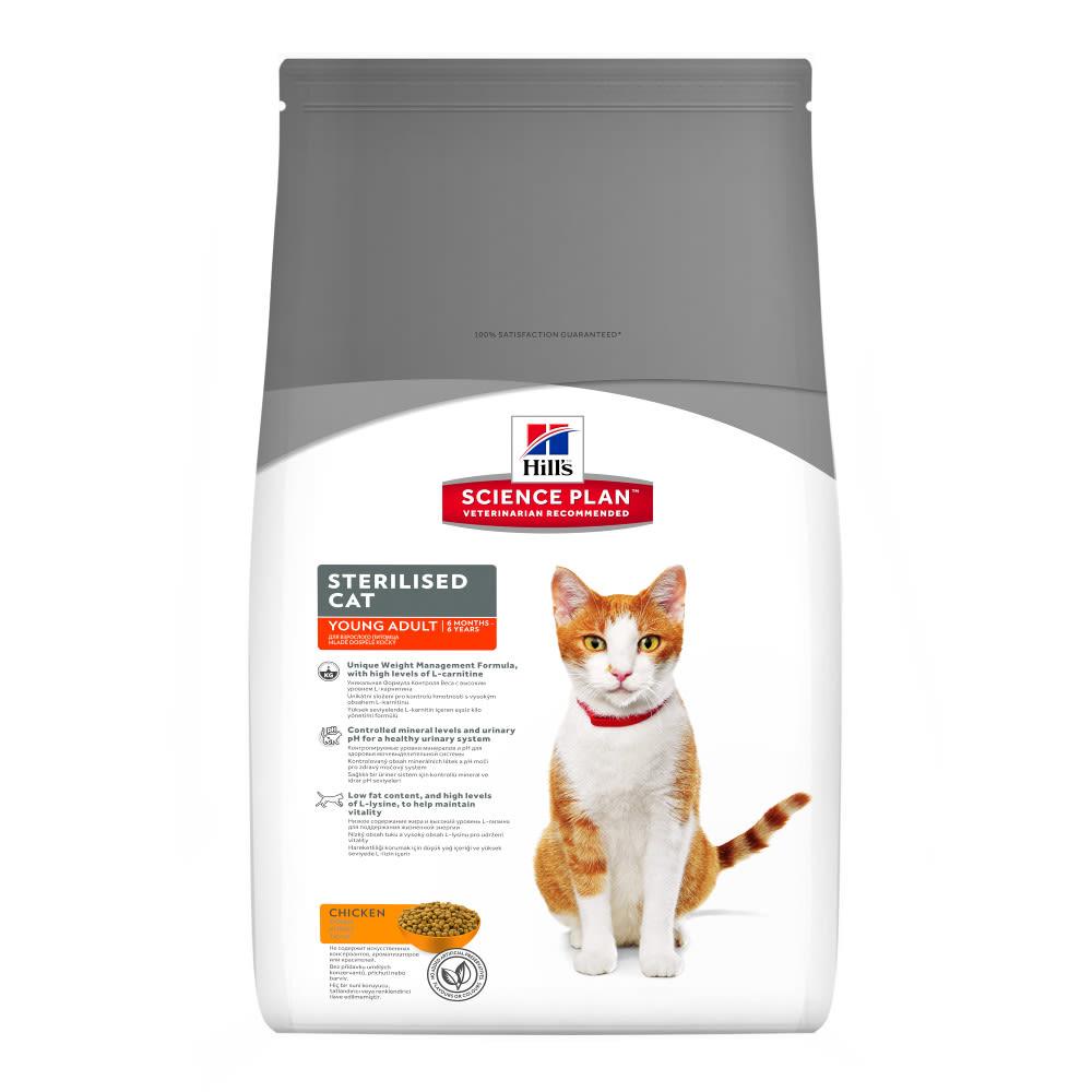 Kitten   Food, Care & Toys For Kittens   MedicAnimal com